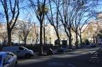 Монтевидео. Деревья на Пласа-де-Каганча.